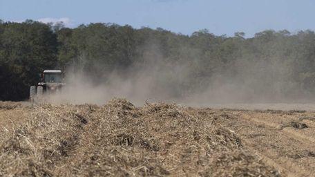 A dry farm field in Cutchogue. Long Island