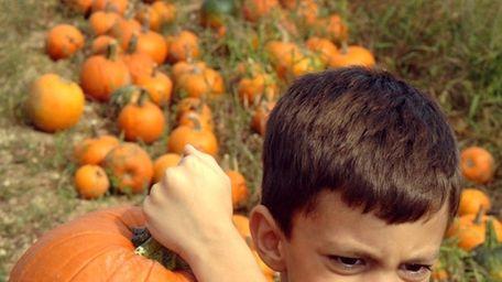 Kids can enjoy pumpkin picking and more fun