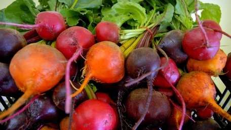 Beets at Sang Lee Farm in Peconic. These