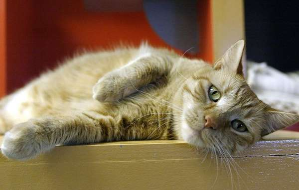 Like humans, cats react differently to different types