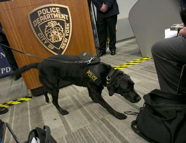 New York City Police Dept. bomb sniffing dog