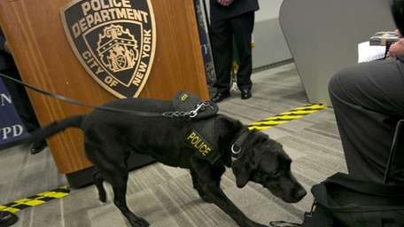 New York City Police Dept. bomb sniffing dog