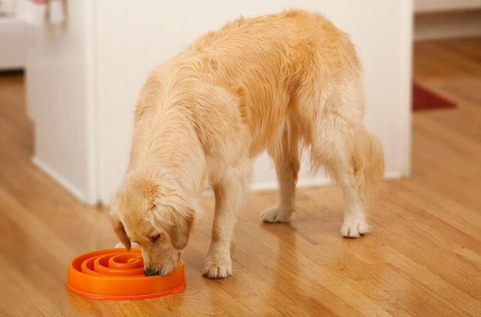 Help your dog maintain a mellow eating pace