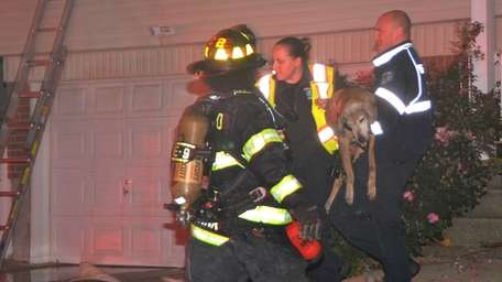 The Deer Park Fire Department carry a dog