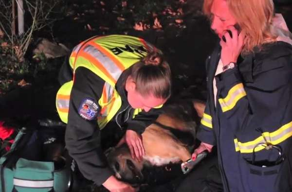 A hound mix named DiDi was rescued and revived by firefighters on Nov. 7, 2013, when they responded to a house fire in Deer Park. The residents were not home, but when firefighters broke down a door to get inside, they discovered the dog, which was lethargic, breathing heavily and experiencing rapid heartbeat. Assistant Chief Anthony Biolsi carried the dog outside, where EMS responders administered oxygen to the dog. DiDi was taken to Deer Park Animal Hospital and then Veterinary Medical Center of Long Island in West Islip for futher treatment, and an unofficial report indicated the dog was doing fine.  | <a href=