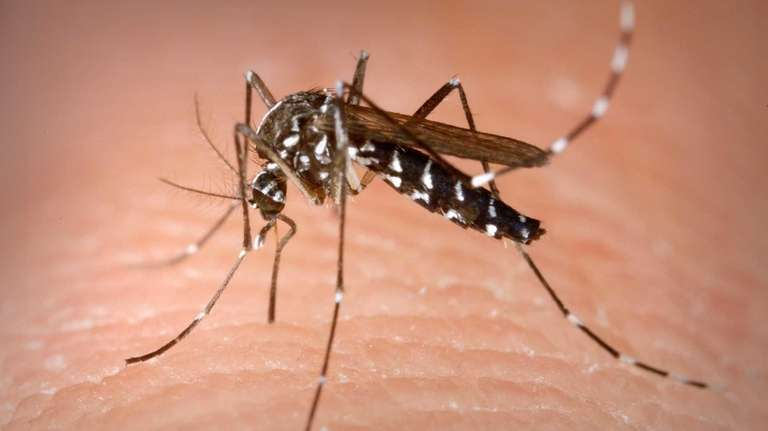 Dengue is caused by a virus carried by