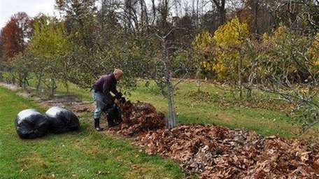 Leaves can be beneficial to your yard and