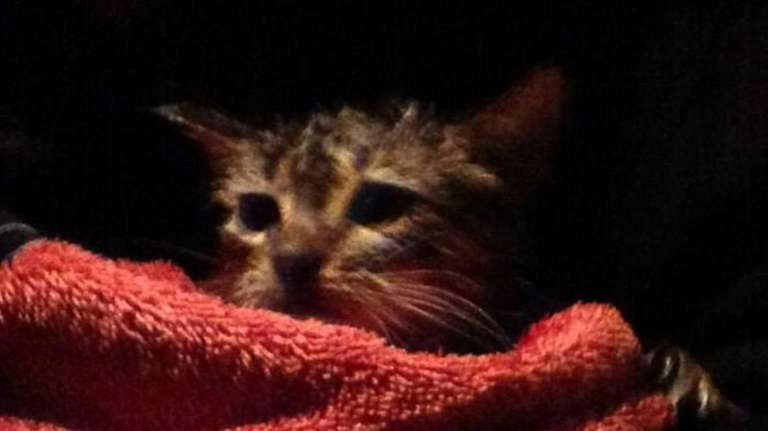 An 8-week-old kitten was rescued from a drainage