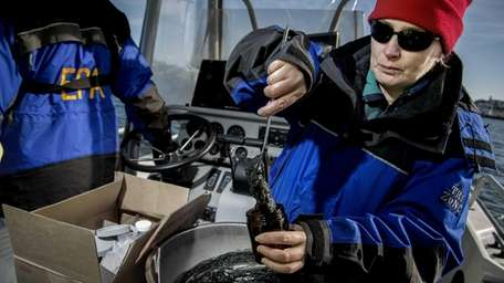 Darvene Adams divides seabed samples into containers designated