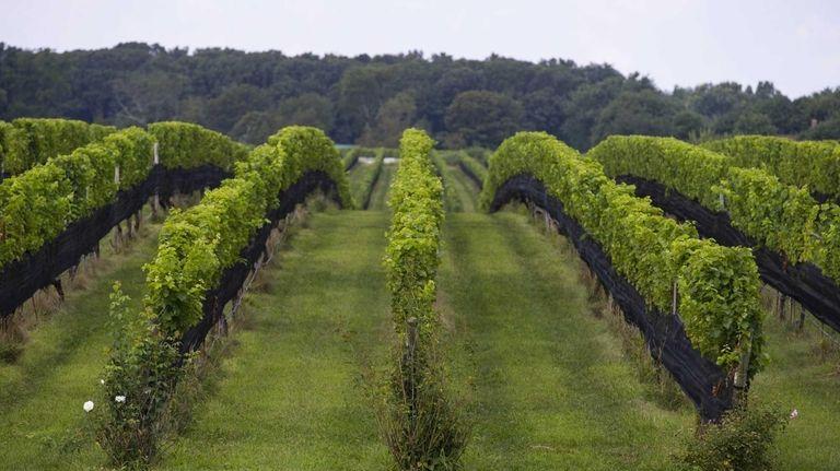 Paumanok Vineyards in Aquebogue. (Aug. 28, 2013)