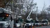 PSE&G crews trim trees along Searingtown Road, just