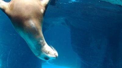 The Long Island Aquarium & Exhibition Center in