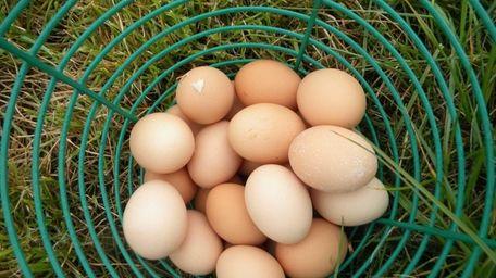 Browder's Birds in Mattituck sells certified organic, pastured
