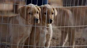 "Scene from Budweiser's ""Puppy Love"" Super Bowl commercial."