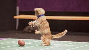 "A player takes a short ""paws"" before tackling"
