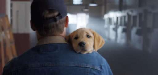 "Budweiser's ""Puppy Love"" Super Bowl commercial, a fan"