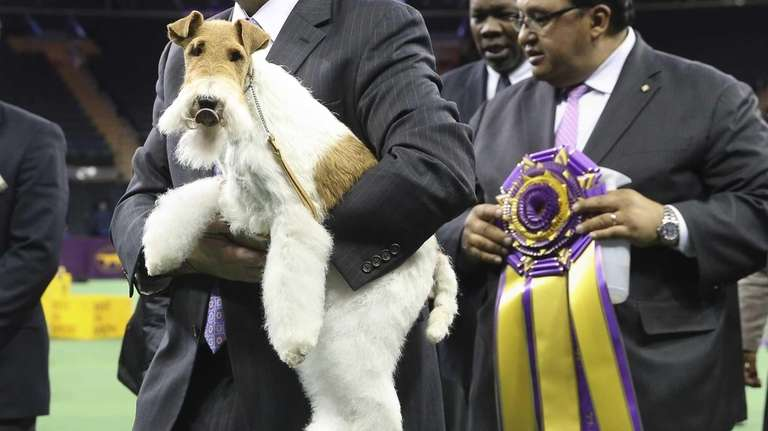 Sky, a wire fox terrier, is carried from