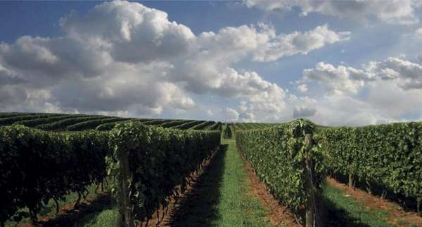 Wölffer Estate Vineyard, 139 Sagg Rd., Sagaponack, 631-537-5106,