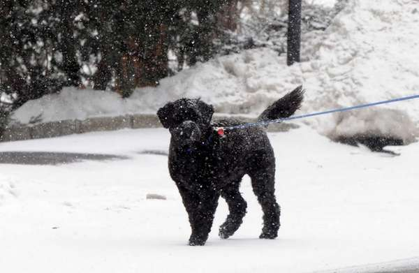 Anneke Gaber, of Huntington, walks her dog Ebony,