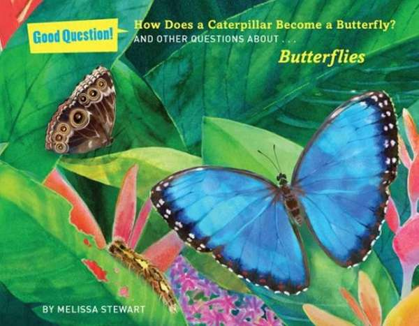 """Cover of """"How Does a Caterpillar Become a"""