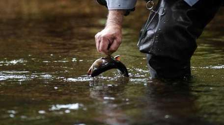 Jack Flannery of Totowa, NJ catches a Brook