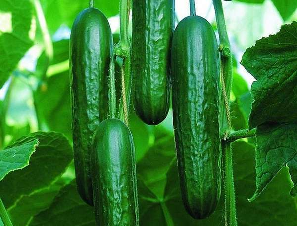 2014 is the Year of the Cucumber, according