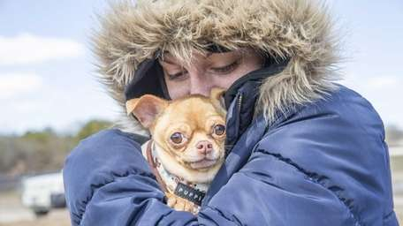 Melissa Mulcahy, of Selden, keeps her Chihuahua, Chico,