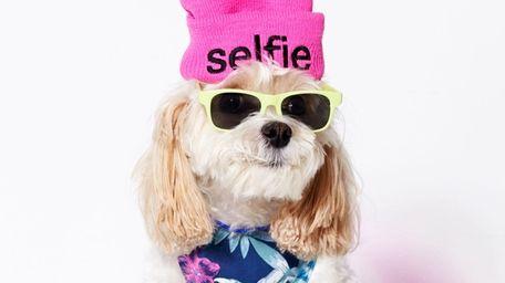 Lottie Moon is among the American Beagle models.