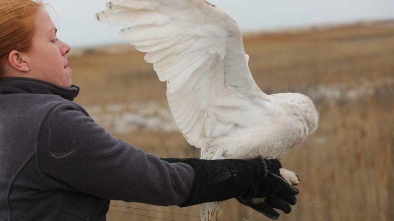 Wildlife Center Supervisor Lauren Schulz releases a snowy