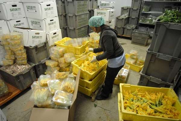 An employee at Satur Farms packs squash blossoms
