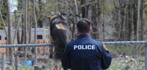 Suffolk County police K-9 unit searches along Brightside