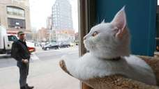The Cat Cafe by Purina ONE pop-up will