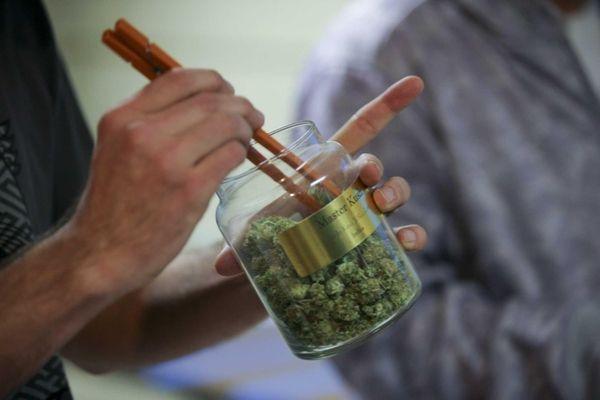 An employee pulls marijuana out of a large