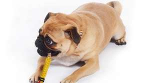 A pencil-shaped rope toy from Brooklyn-based Waggo.
