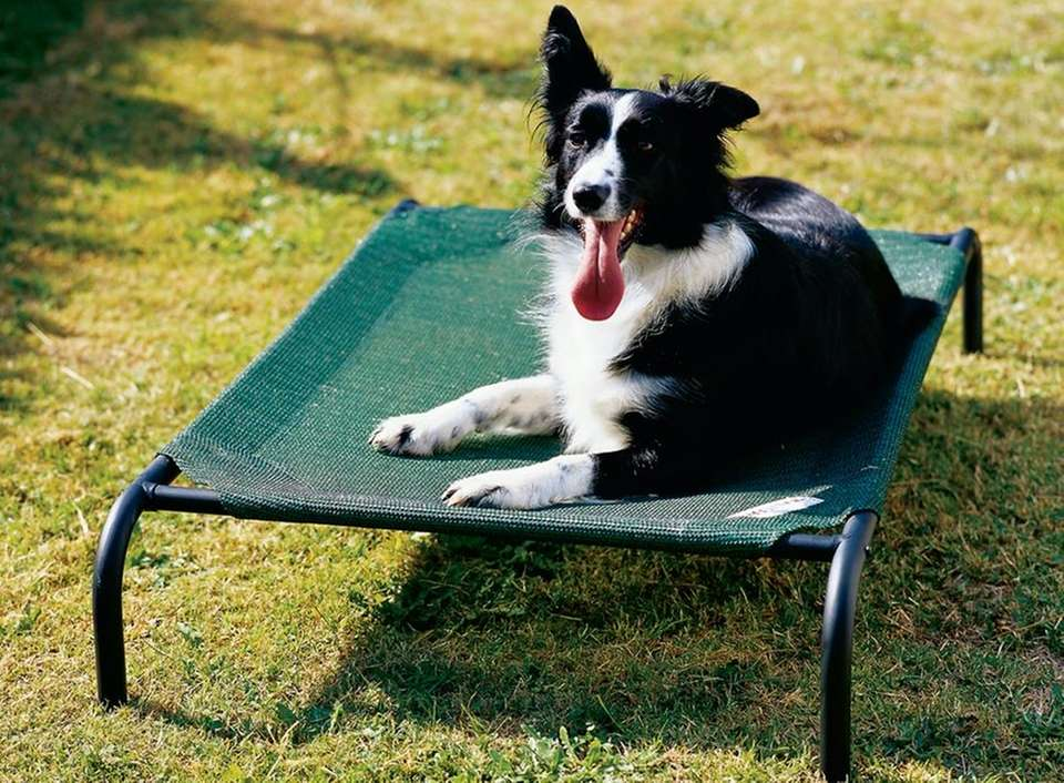 Pros for your dog: The Coolaroo mesh fabric