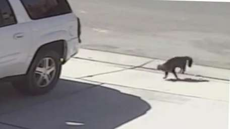 A house cat runs after a dog after