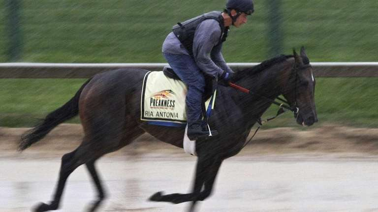Preakness Stakes entrant Ria Antonia gallops in the