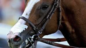 California Chrome is seen with a nasal breathing
