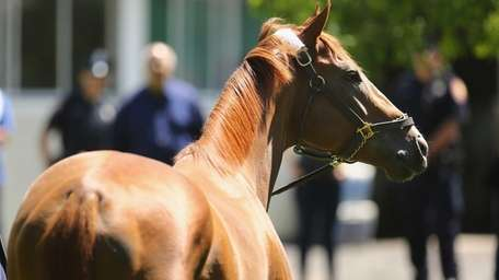 Kentucky Derby and Preakness winner California Chrome stands