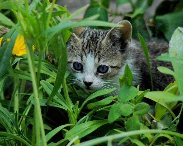 A cat in a garden.