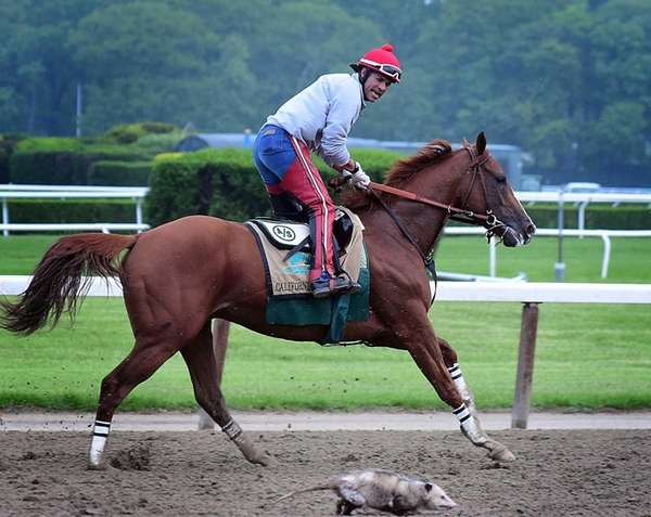 Kentucky Derby and Preakness Stakes winner California Chrome