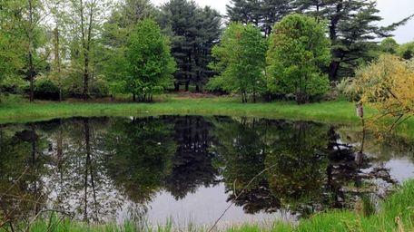A small lake on Randall Road in Ridge