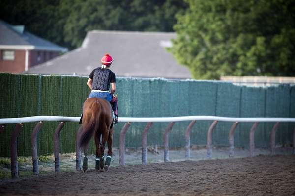 Triple Crown contender California Chrome walking with exercise