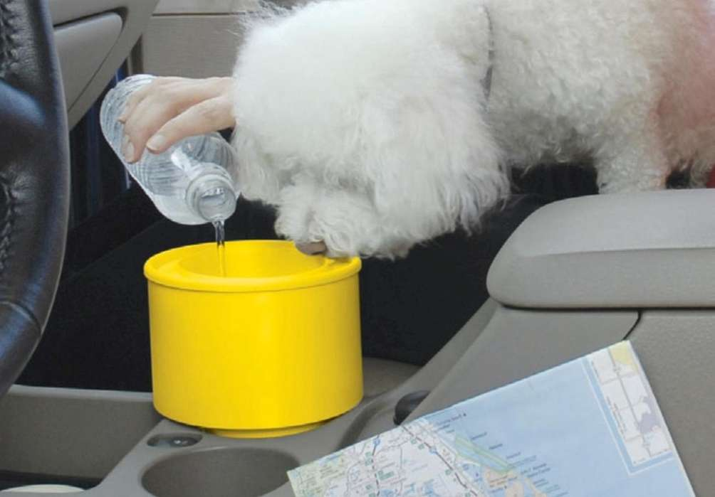 Keeping pets hydrated is a concern for owners