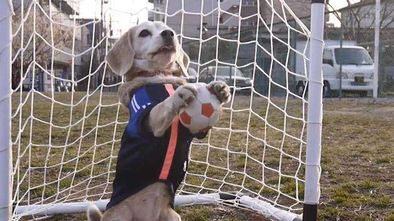 Purin the Super Beagle plays her sport of