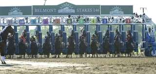The horses break at the Belmont Stakes on