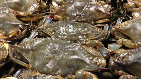 Live, local soft-shell crabs are on sale at