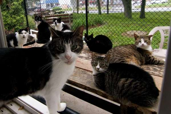 Cats at the Smithtown Animal Shelter in Smithtown