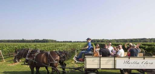 Percheron horses lead the tour driven by Hanna