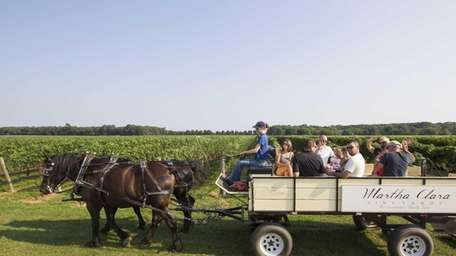 Percheron horses pull a tour wagon driven by
